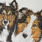 Two Shelties Poster