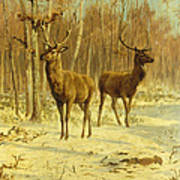 Two Stags In A Clearing In Winter Poster