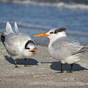 Two Terns Talking Poster