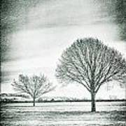 Two Trees In A Field Poster
