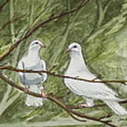 Two White Doves Poster
