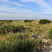 Tybee Island Dunes And Path Poster