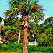 Tybee Palm Poster