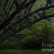 Tyler Tree 1 Poster