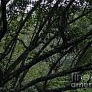 Tyler Tree 2 Poster