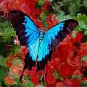 Ulysses Butterfly Poster