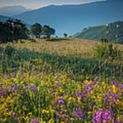 Umbria Wildflowers Poster