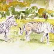 Umfalozi Zebra Poster by David  Hawkins