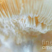 Under The Mushroom Poster