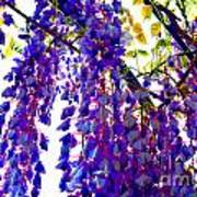 Under The Wisteria Poster