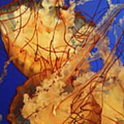 Underwater Friends - Jelly Fish By Diana Sainz Poster