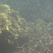 Underwater - Long Boat Tour - Phi Phi Island - 011338 Poster