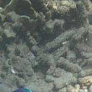 Underwater - Long Boat Tour - Phi Phi Island - 011356 Poster
