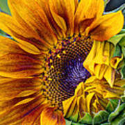 Unfurling Beauty - Cropped Version Poster