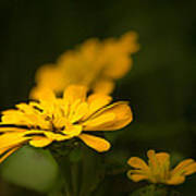 Unidentified Yellow Flower Poster