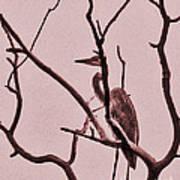Unknown Bird Poster