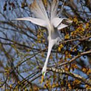 Upside Down Egret Poster