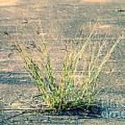Urban Grass Poster