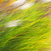 Urban Nature Fall Grass Abstract Poster