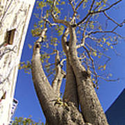 Urban Trees No 1 Poster