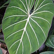 Us Botanic Garden - 121212 Poster