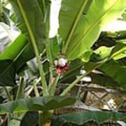 Us Botanic Garden - 12122 Poster