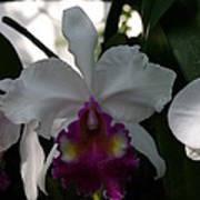 Us Botanic Garden - 121244 Poster by DC Photographer
