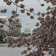 Us Capitol - Cherry Blossoms - Washington Dc - 01132 Poster by DC Photographer