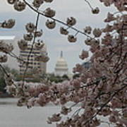 Us Capitol - Cherry Blossoms - Washington Dc - 01133 Poster by DC Photographer