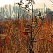 Autumn Grass6277 Poster
