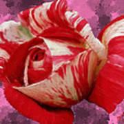 Valentine's Day Rose Poster