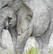 Vanishing Thunder Series-baby Elephant I Poster