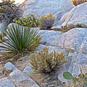 Varied Desert Flora Along Barker Dam Trail In Joshua Tree Np-ca Poster