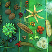Variety Of Seeds And Fruits Poster
