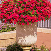 Vase Of Petunias Poster