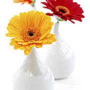 Vases With Gerbera Flowers Poster