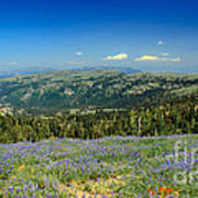 Vast View And Lupine Poster