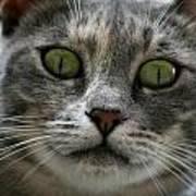 Venetian Cat Poster