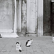 Cats Of Venice Poster