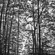 Vermont Forest Sunrise Ricker Pond Black And White Poster