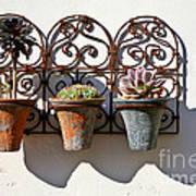 Vertical Cacti Garden Poster