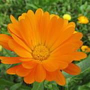 Very Lovely Orange Bloom Poster