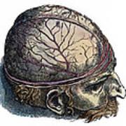 Vesalius: Cranium Poster