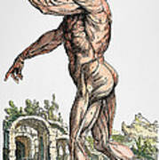 Vesalius: Muscles 02, 1543 Poster