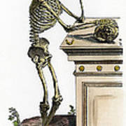 Vesalius: Skeleton, 1543 Poster