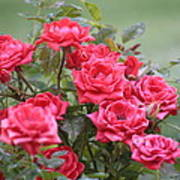 Victorian Rose Garden Poster