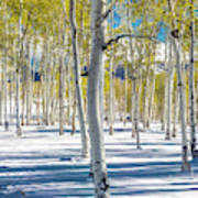 View Of Aspens In Fresh Winter Snow Poster