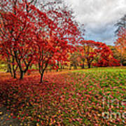 View Of Autumn Poster