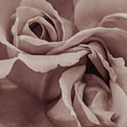 Vignette Rose. Poster