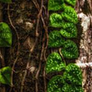 Vine Growing On Tree Poster by Al Andersen